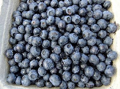 sites/default/files/blueberries-65648_640_0.jpeg