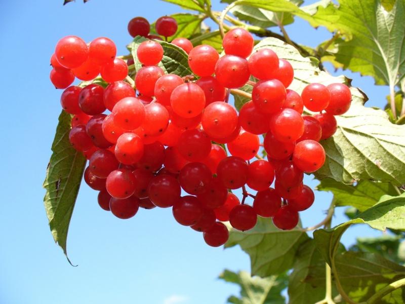 sites/default/files/cranberry-93747_1280.jpg