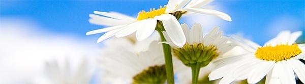 sites/default/files/sommar-blomma.jpg