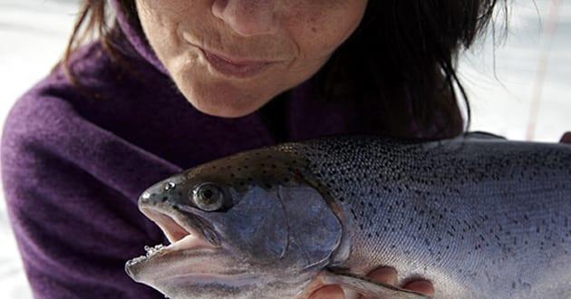 Därför ska du satsa på svensk fisk med hög kvalité