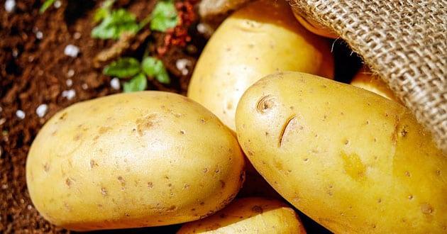 Potatis för hälsa och raketbränsle vid träning – 10 fördelar och gott recept