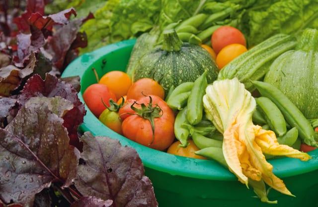 Att odla grönsaker är nyttigt både för kropp och själ