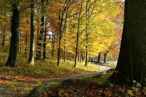 Möt hösten på bästa sätt