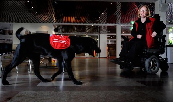 Hundar kan upptäcka lungcancer