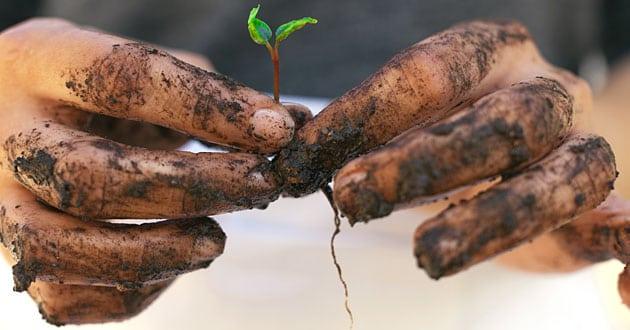 Därför välja ekologiskt – 8 miljö- och hälsovinster