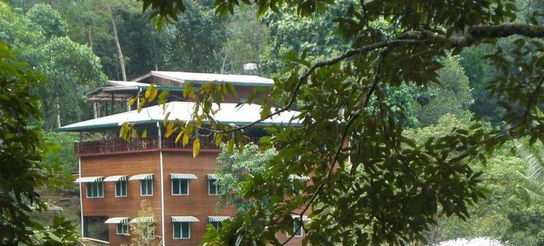 Åk på en yogaresa till regnskogen på Borneo