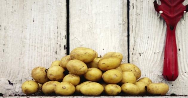 Recept: Sommarens godaste potatissallader