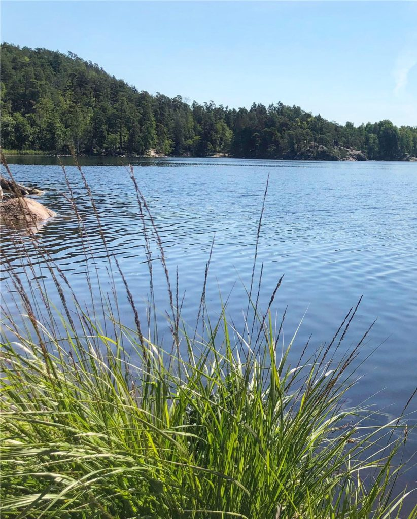 vass i Ågelsjön