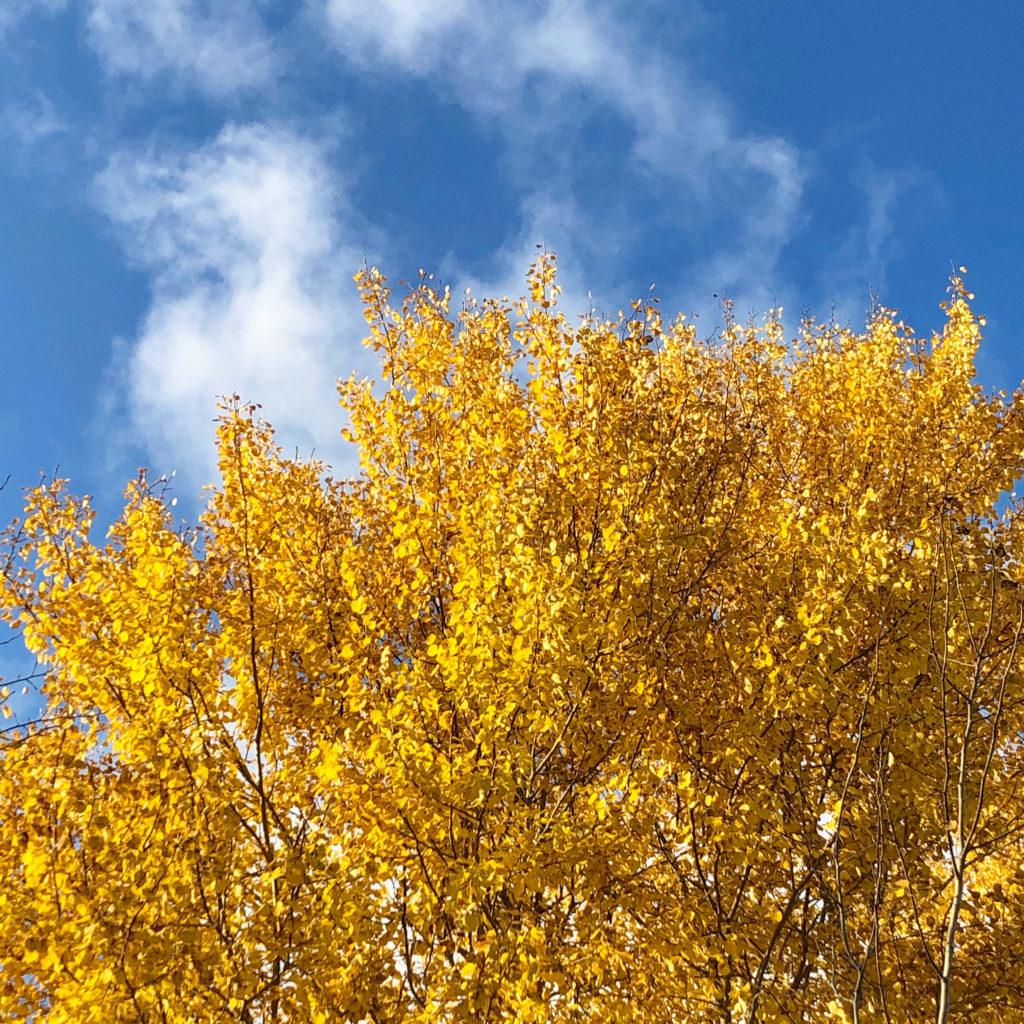 Höstlöv höstträd