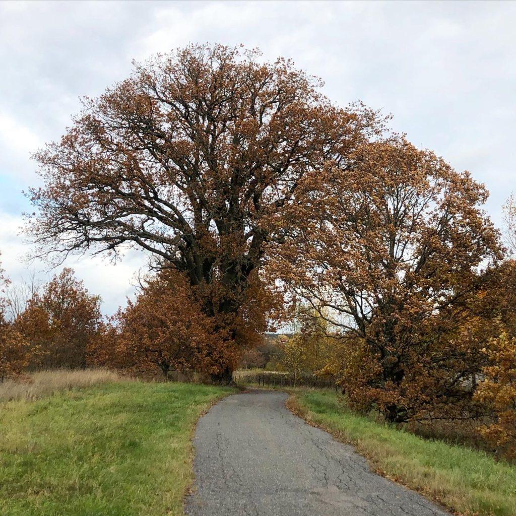Favoritträdet