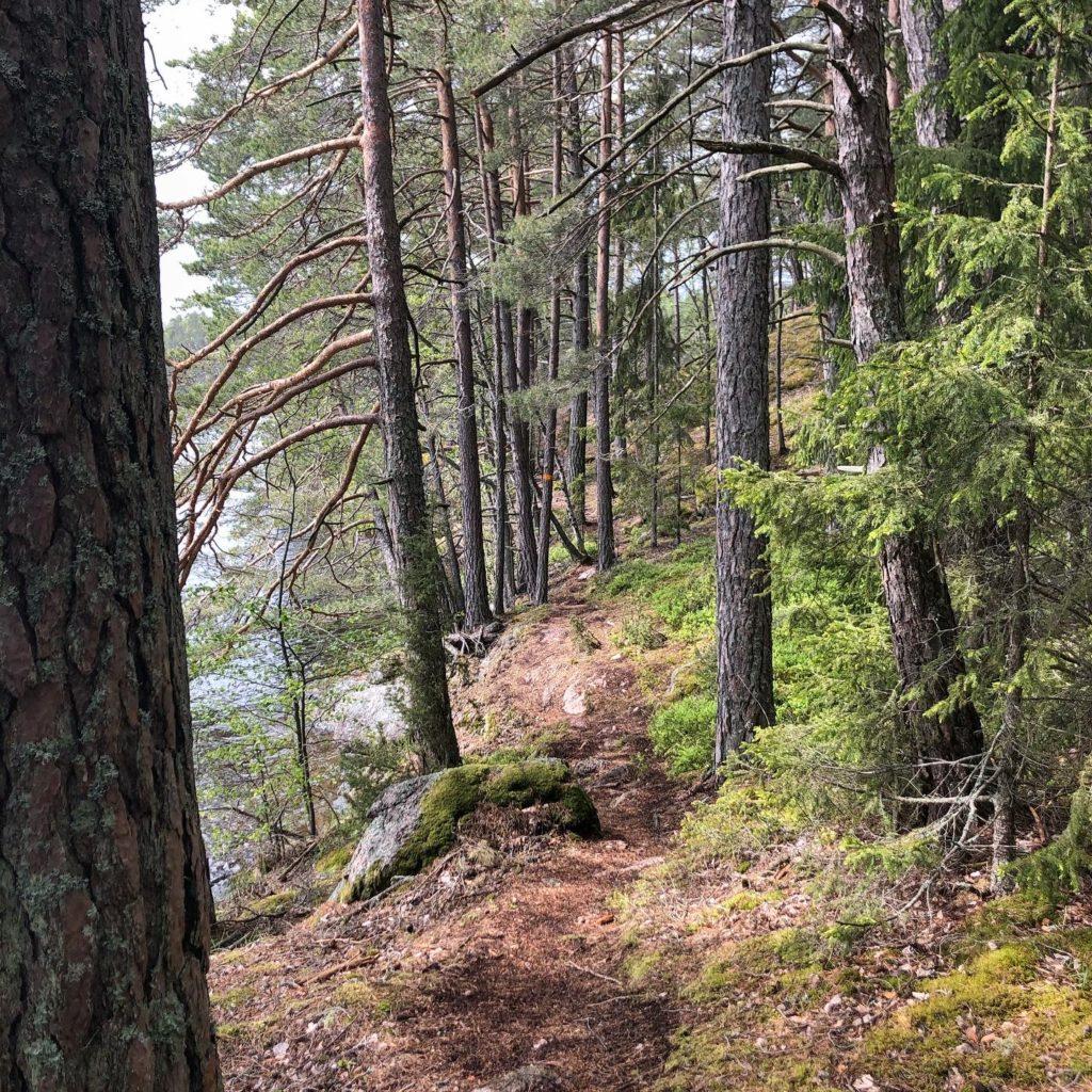 skoggstigar